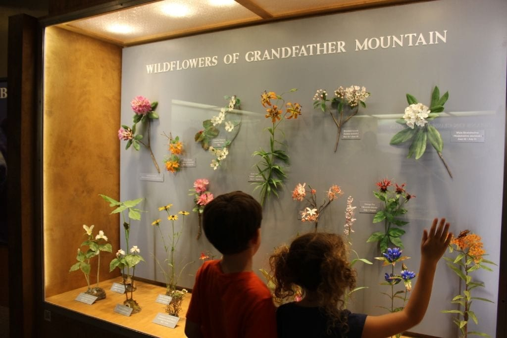 Picture of wildflower exhibit