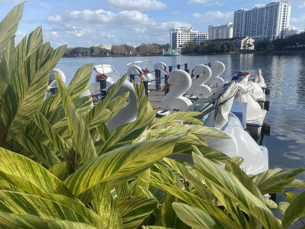swan boats lined up at Lake Eola in Orlando
